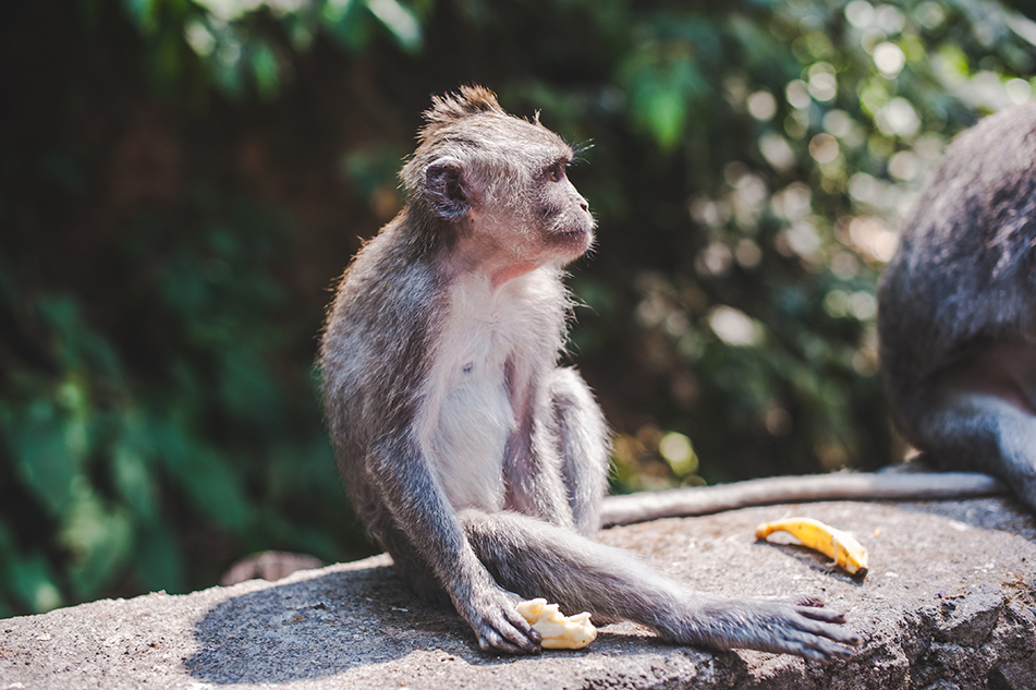 Bali blog 44
