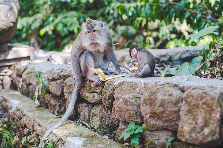 Bali blog 45