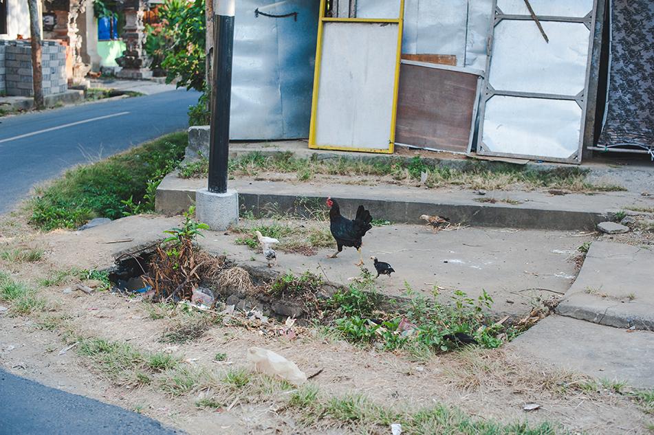 Bali blog 58