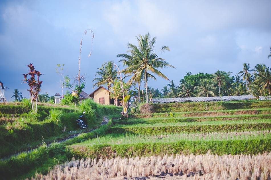 Bali blog 61
