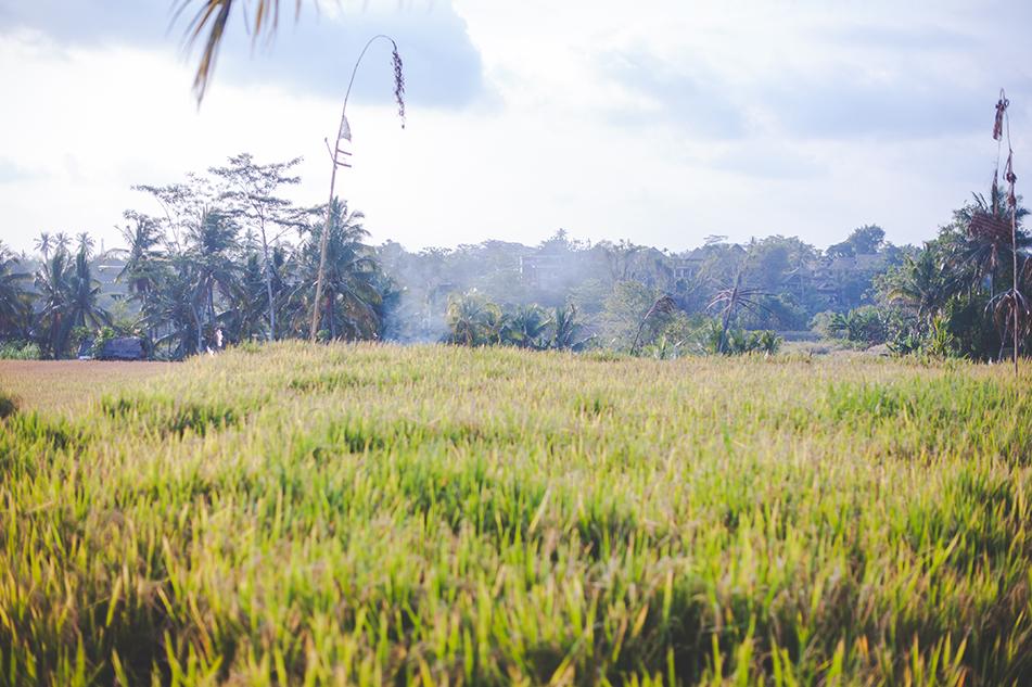 Bali blog 62